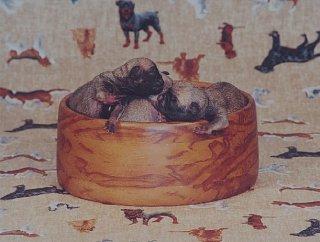 Nutty Pug Bowl.jpg