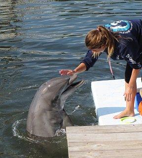 post.dolphin.jpg