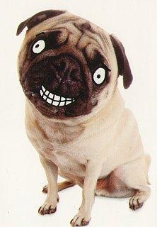 1 B Kathleen Smiling Pug.jpg