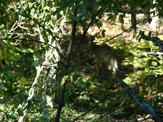 Click image for larger version  Name:Find_the_deer_Jefferson_NF.jpg Views:27 Size:253.1 KB ID:10288