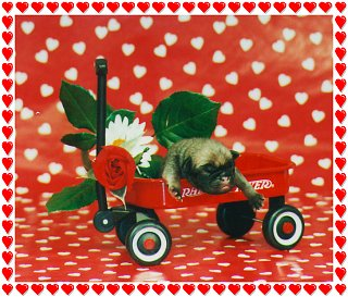 Happy Valentine's Puppy in wagon with Border only for 2013.jpg