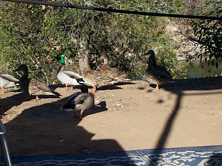 Click image for larger version  Name:Ducks_3.jpg Views:16 Size:224.5 KB ID:10690