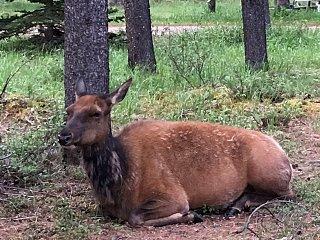 Elk Campground.JPG