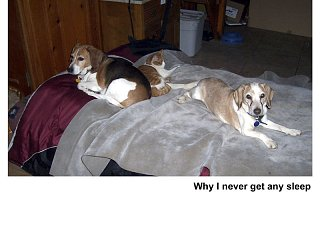 dogandcatshow1.jpg