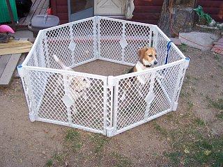 beaglejail.jpg