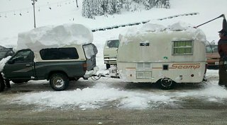 scamp snow.jpg
