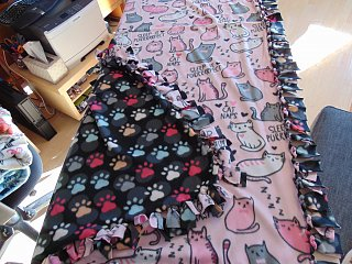 cat nap multi color paw prints.jpg