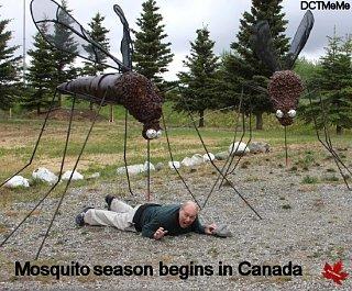 Mosquitos in Canada.jpg