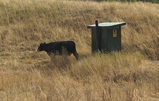 cow outhouse w.jpg