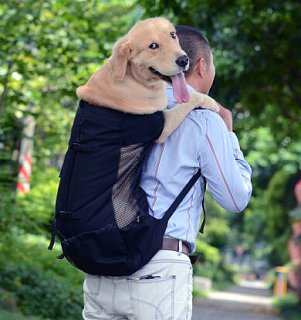 dog backpack.jpg