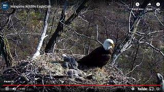 Eagle 13.jpg