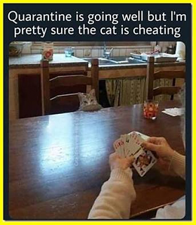 Cheating cat.png