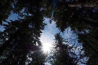 Solar canopy Skagit.jpg