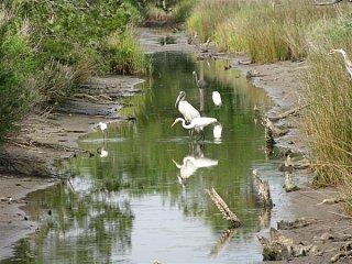 tidal_stream_birds__Custom_.jpg