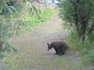 Click image for larger version  Name:bear.JPG Views:54 Size:48.2 KB ID:15590