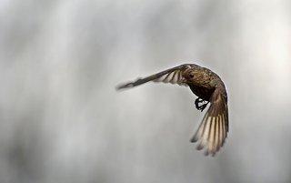 0324_bird_1_web.jpg