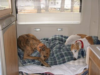 Click image for larger version  Name:Dogs_in_Camper.JPG Views:94 Size:99.6 KB ID:16273