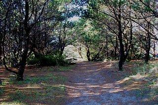 beach_path_2.jpg