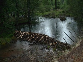 Click image for larger version  Name:03_600BeaverPond.jpg Views:32 Size:102.4 KB ID:17586
