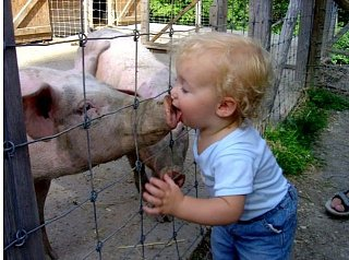 Click image for larger version  Name:swine.jpg Views:86 Size:61.4 KB ID:19825