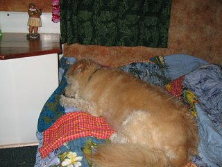 Click image for larger version  Name:dogtired.jpg Views:138 Size:50.3 KB ID:2046
