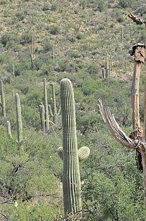 Saguaro_National_Park_ace.jpg