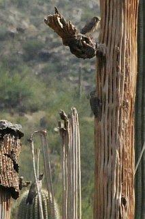 Saguaro_National_Park_aaa.jpg