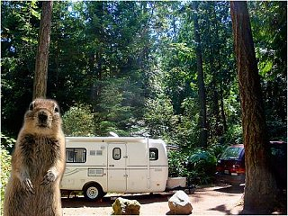Click image for larger version  Name:squirrel.jpg Views:87 Size:62.7 KB ID:22765