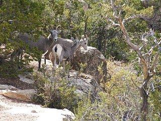 Grand_Canyon___09_077.JPG