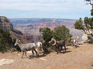 Grand_Canyon___09_085.JPG