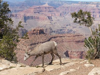 Grand_Canyon___09_086.JPG