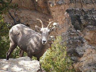 Grand_Canyon___09_089.JPG