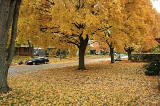 Click image for larger version  Name:Fall_Colours.jpg Views:30 Size:123.1 KB ID:24671