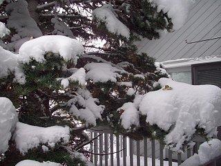 Fall_snow_storm_007.JPG