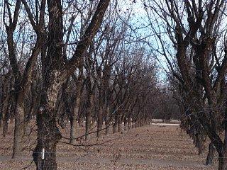 Harvested_Trees.JPG