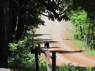Trip_pics_June_14_2010_057__Small_.jpg
