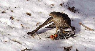 Raptorandprey.jpg