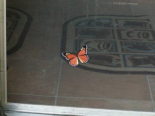 Click image for larger version  Name:butterfly_on_door.jpg Views:53 Size:53.2 KB ID:29733