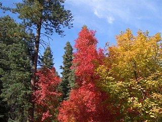 trip pics Oct 18-2010 027 (Small).JPG