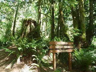 rasar woods.jpg