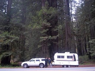 trailer in redwoods.jpg