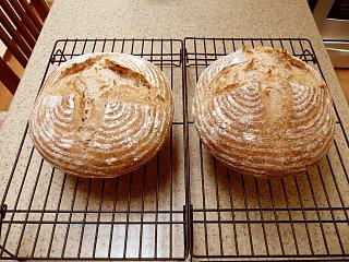 latest loaves.jpg