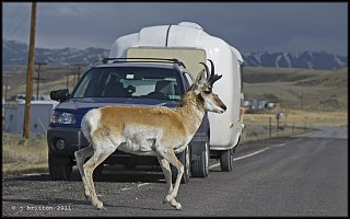 rucio in pronghorn country small.jpg