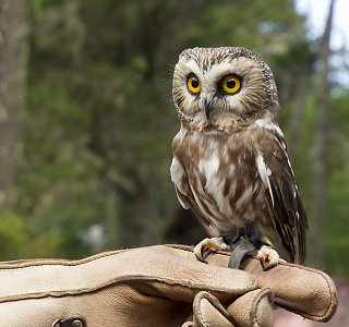Owl P7154026.jpg