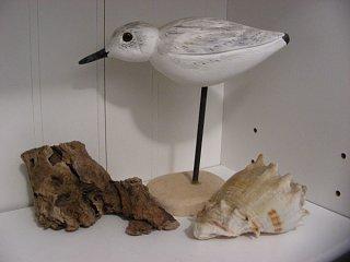 Sanderling 1.jpg