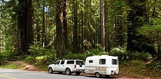 Scamp redwoods north.jpg