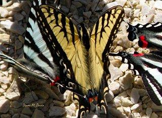Northcreek2012Butterflies2E.jpg