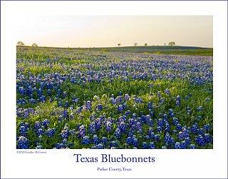 texas_bluebonnet_print.jpg