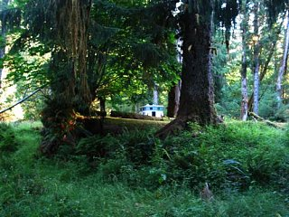 Click image for larger version  Name:7._Olympic_NP_HOH_River_Campground7__Custom_.JPG Views:47 Size:52.3 KB ID:4572