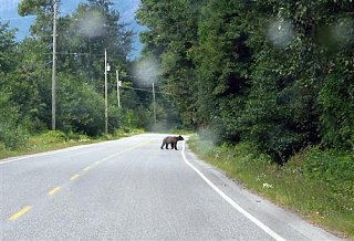 Click image for larger version  Name:96.__Bear_on_Road__Custom_.JPG Views:54 Size:42.1 KB ID:4580